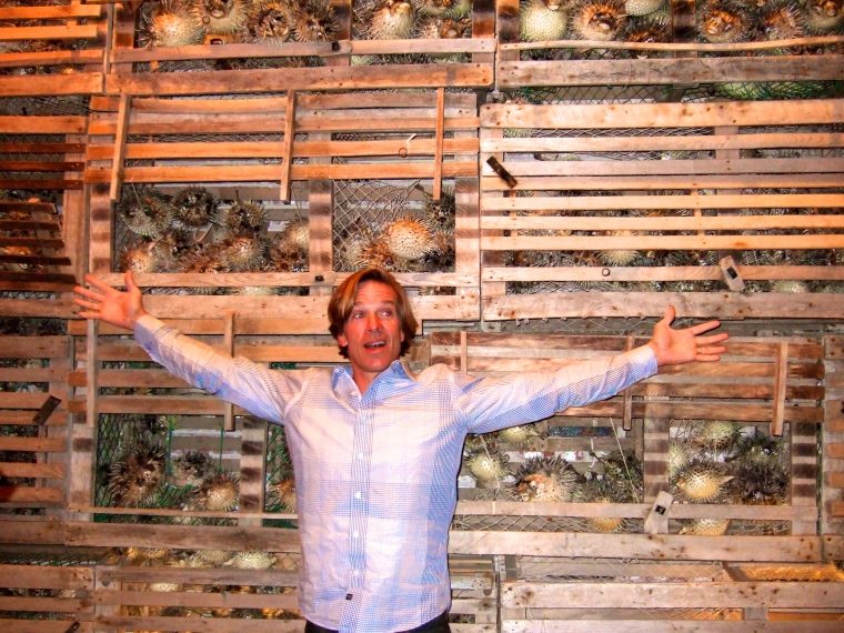 Loved this wall of dried pufferfish!