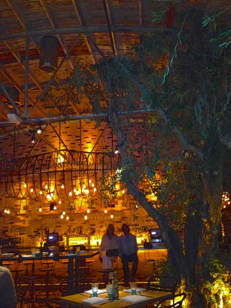 olive tree:bar