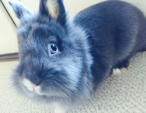 Meet Marlowe, the world's most adorable bunny.